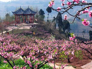 International Peach Blossom Festival