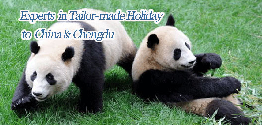 Tailor make a Chengdu tour
