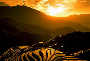 Longji Terrace Fields