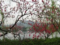 April Scenery in Hangzhou