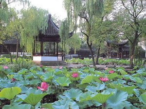 Lotus Festival in the Humble Administrators Garden