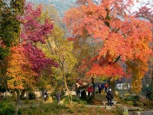 Tianping Autumn Leaves Festival