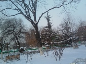 Tianjin Snowing Weather