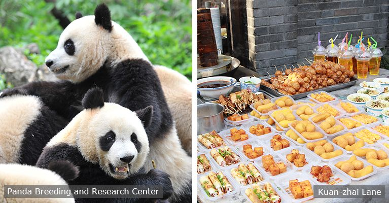 giant panda and local food