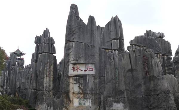 The Stone Forest