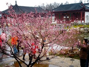 Plum Blossom Festival in East Lake Park